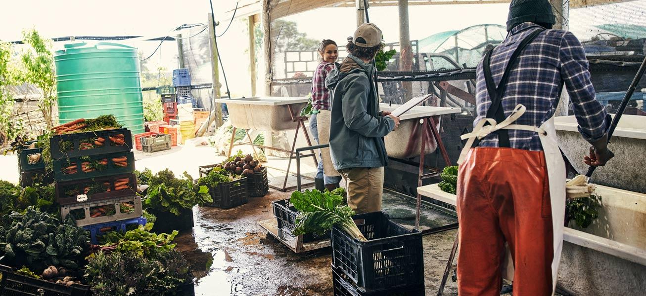 team-agriculture-vegetables-food-farm